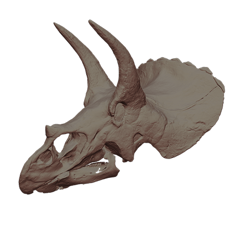 Triceratops-Schädel 3D-Modell
